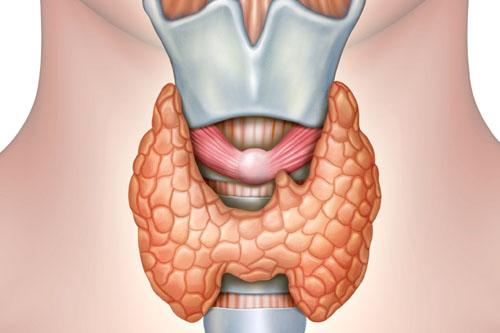 Choroby tarczycy - wpływ tarczycy na problemy z wagą   sunela.eu